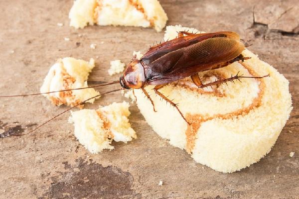 Por que é tão difícil matar uma barata
