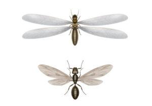 Diferenças entre cupins e formigas
